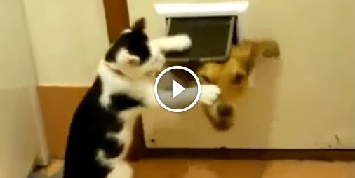 Vidéo La compil\u0027 des chats qui font des bêtises , Vidéo Animaux , Look Ma  Video.fr